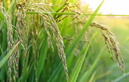 農業分野におけるドローンの活用 サムネイル画像